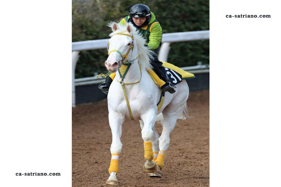 Free Horse Racing Systems
